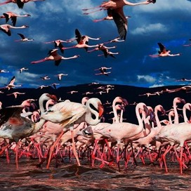 Daytrip Lake Nakuru - Date with the flamingoes
