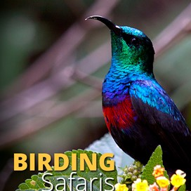 Bird Watching Safari